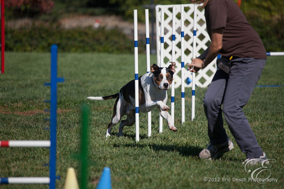 Agility Fun Match