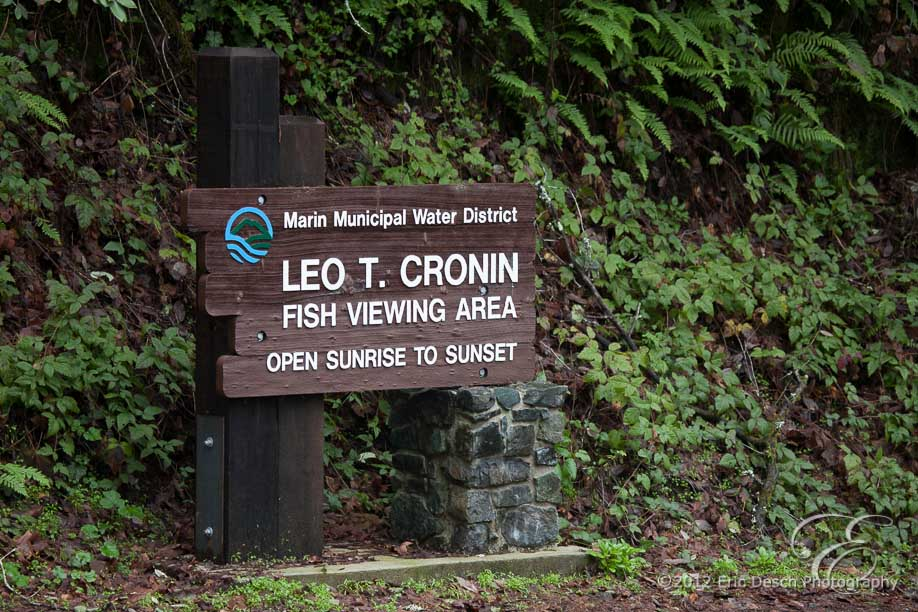 Leo Cronin Sign